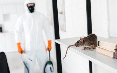 Acabe com os ratos!